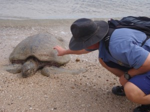 Poor sea turtle
