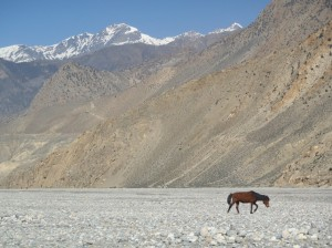 02-Annapurna (102)
