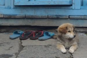 02-Annapurna (17)