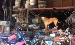 Local junk yard dog while on a walk into Rasada a few kms down the road.