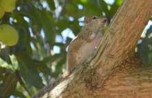 A little squirrel