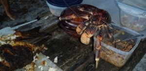 Sneaky crabs trying to steal our fish!