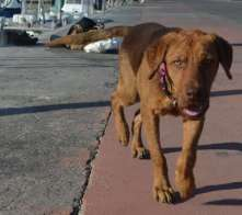 This mangy but friendly dog greeted us each morning at Le Port. Always on the prowl for some scraps.