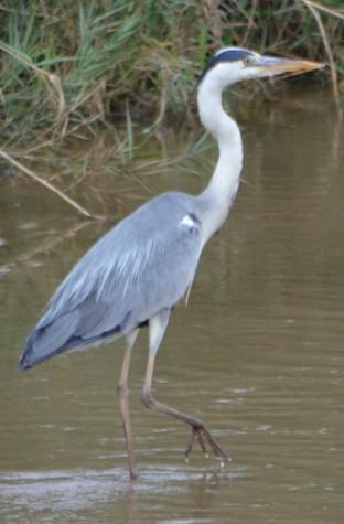 Bird - Stork