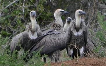Vulture street