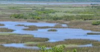iSimangaliso wetland from the Aerial Boardwalk