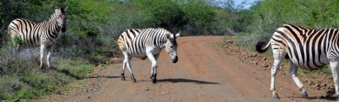 You guessed it - Zebra crossing!