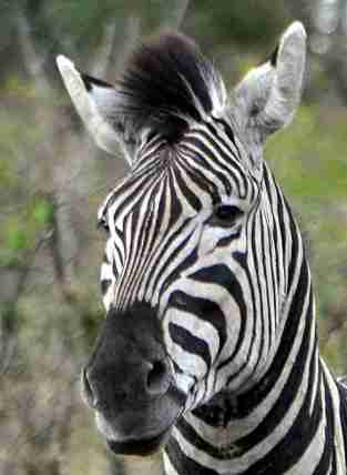 Beautiful stripes