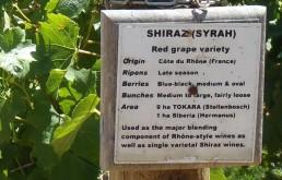A day at a Stellenbosch winery
