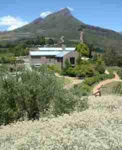 View of Tokara Winery including Fynbos..