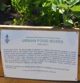 Urban Food Boxes in Stellenbosch