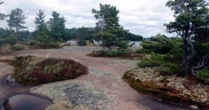 A naturally manicured granite garden