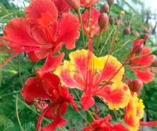 SXM flowers