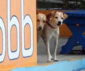 Doggies at Cariacou