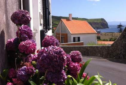 Hydrangeas cover the island