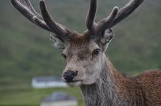 20190713 kathy & alan wild deer (2)
