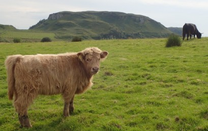 An 'airy coo!