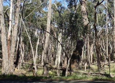 Dry Aussie bush